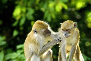 ubud-monkey-jungle